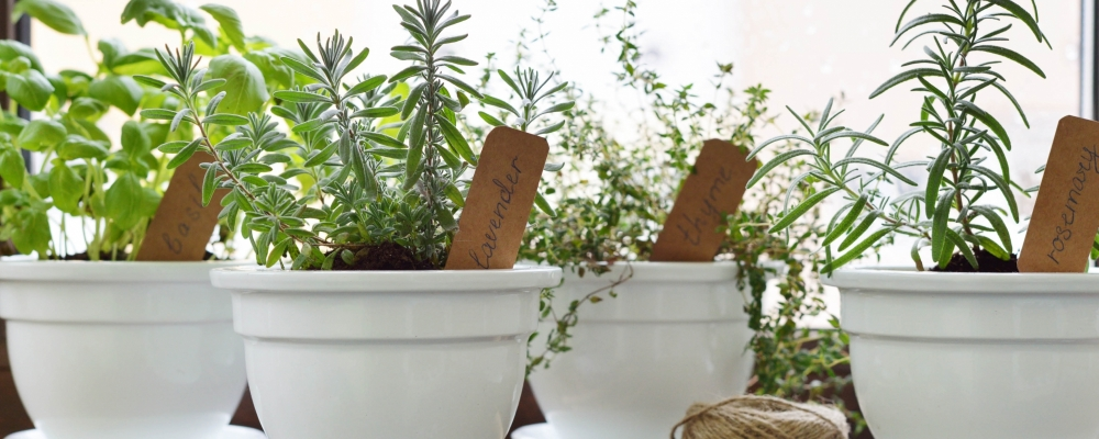 Teaching children to grow food